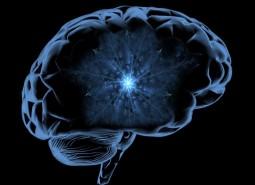 cahier neuroscience